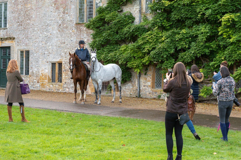 Andrew & his horses