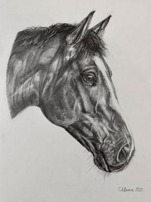 Charlotte drew my horse Leo